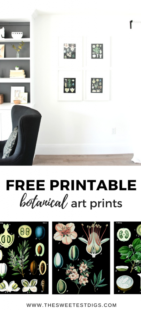 Free Vintage Botanical Art Prints for your Home. Get that classic farmhouse look with these DIY botanical art printables. Click through for the free art prints!